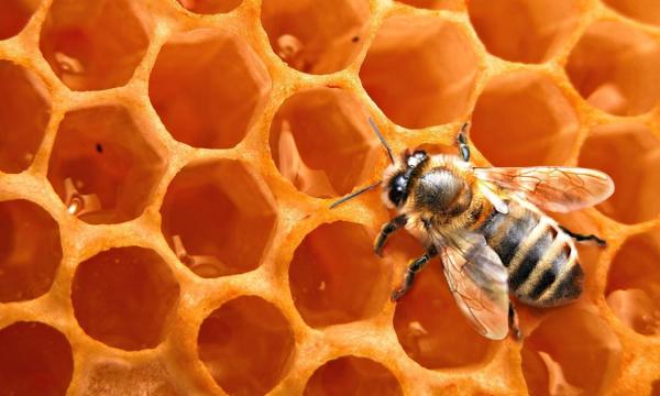 «Неправильные пчелы»: категорически нельзя есть мед и вот почему